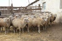 В хозяйстве намерены поднять животноводство.