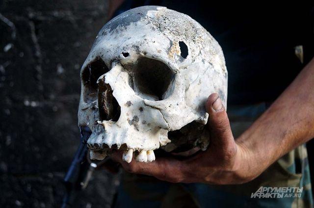 Вханты-мансийском парке «Долина ручьев» отыскали человеческий череп икости