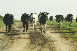 Чем лучше будут условия содержания животных, тем меньше антибиотиков потребуется на лечение.
