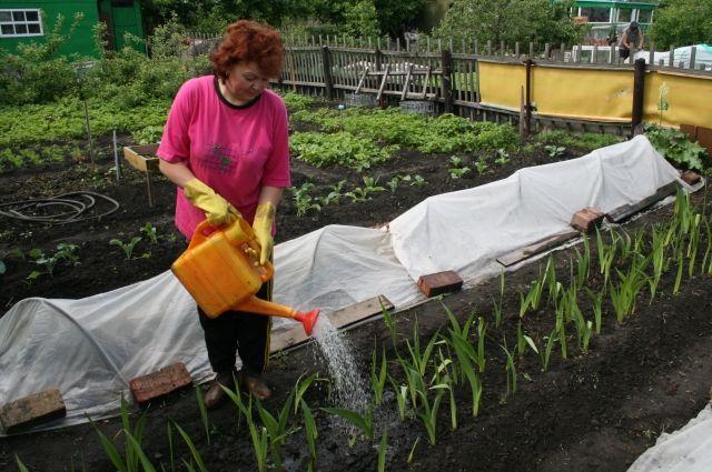 Как делят межу между участками в саду