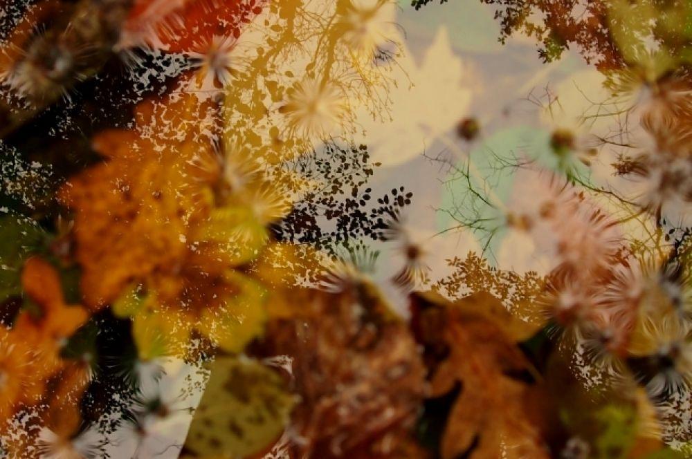 Наталья Демина прислала одну фотографию, но зато удивительно поэтическую. «Осенью в Краснодаре даже лужи прекрасны», - пишет она.