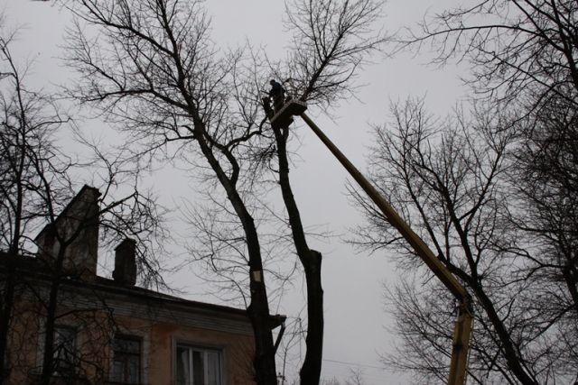 ВСмоленске из-за сноса аварийных деревьев перекроют движение транспорта