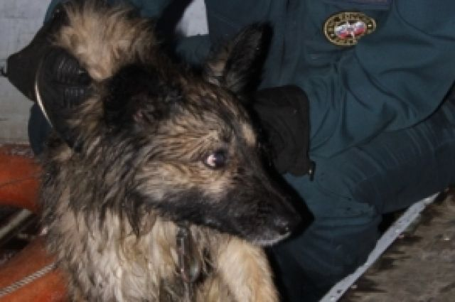 ВСураже изречного плена спасли собаку
