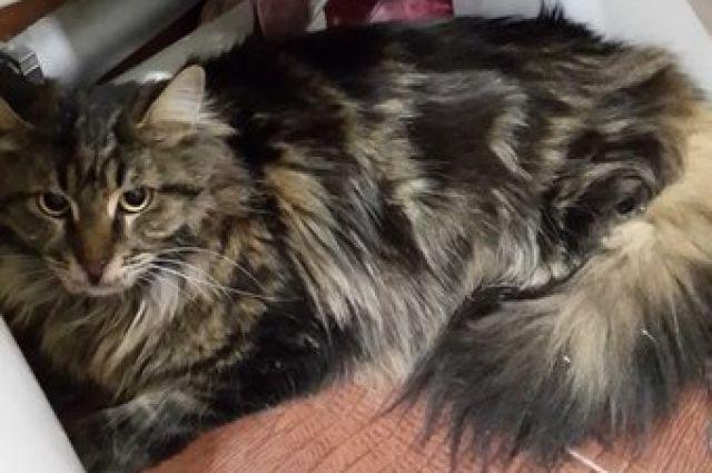 С кем из бывших возлюбленных останутся два кота, решит суд.