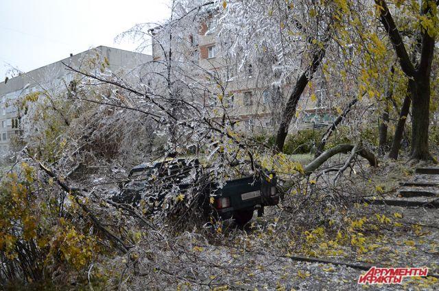 Ствол дерева упал на припаркованный автомобиль