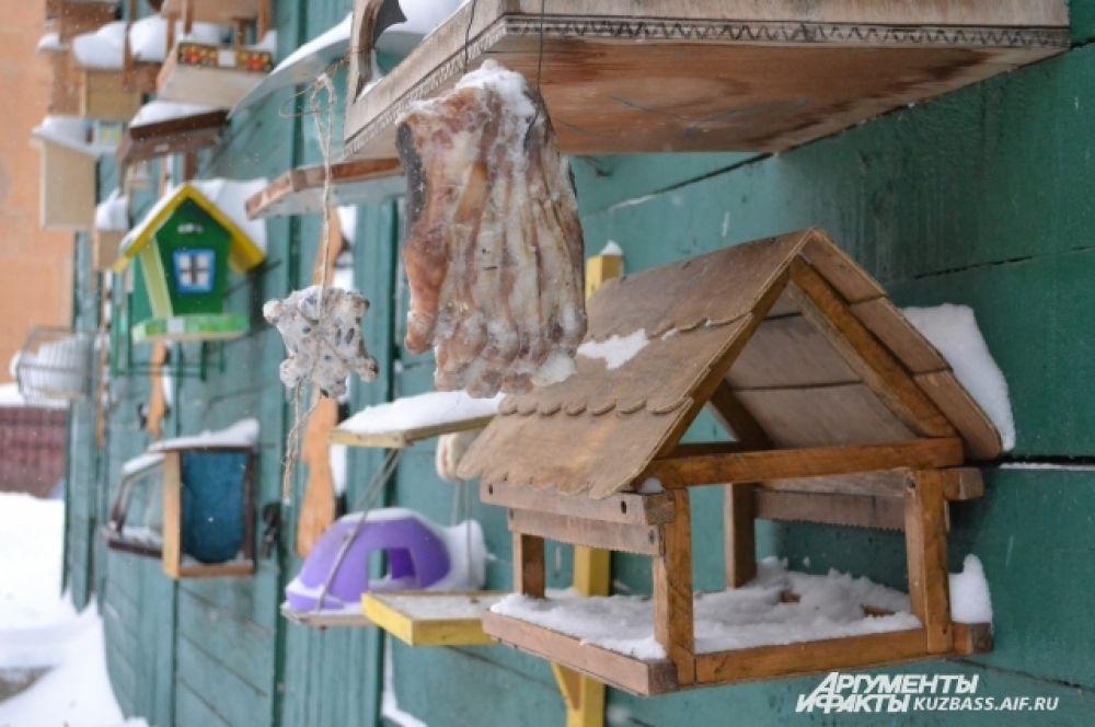 Подкармливать пернатых лучше семенами (подсолнечника, тыквы, арбуза, дыни, рапса, салата, берёзы, ольхи), пшеном, птичьими кормами и яблоками. В морозы в кормушки полезно класть несолёное сало, обрезки мяса. Рядом со станцией, например, висит медвежья лапа.