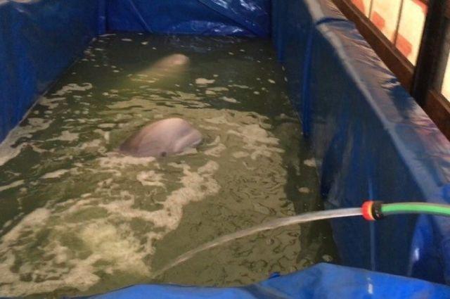 Воронежская генпрокуратура проверит передвижной дельфинарий
