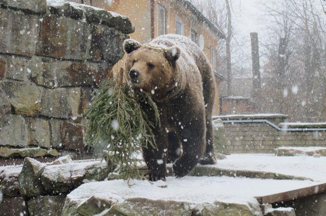 Медведь напугал граждан смоленской деревни