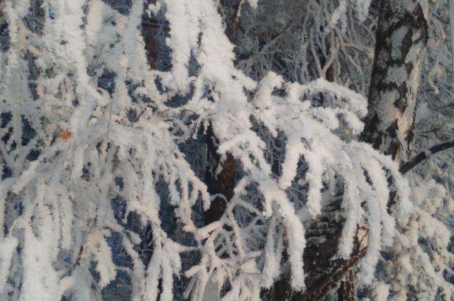 По прогнозам синоптиков, декабрь будет снежным и не очень холодным.