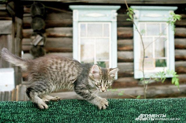 Новосибирец спас котенка отсмерти под колесами авто