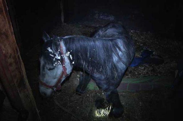 Конь проломил крышу самодельного подвала.