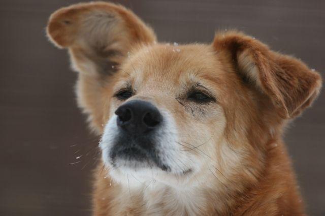 Стая голодных собак нападает налюдей вОктябрьском округе Омска