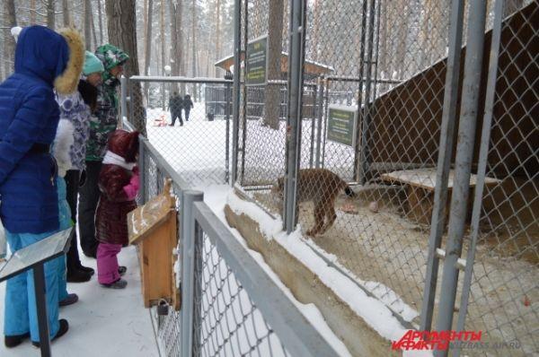 И вместе с родными понаблюдать за животными из мини-зоопарка.