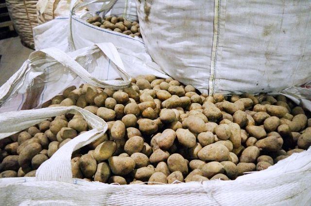 20 тонн белорусской картошки не пустил в Калининград Россельхознадзор.