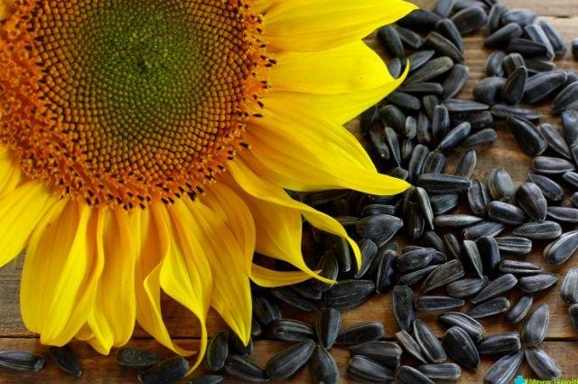 ВУкраинском государстве собрали рекордный урожай подсолнечника завсю историю