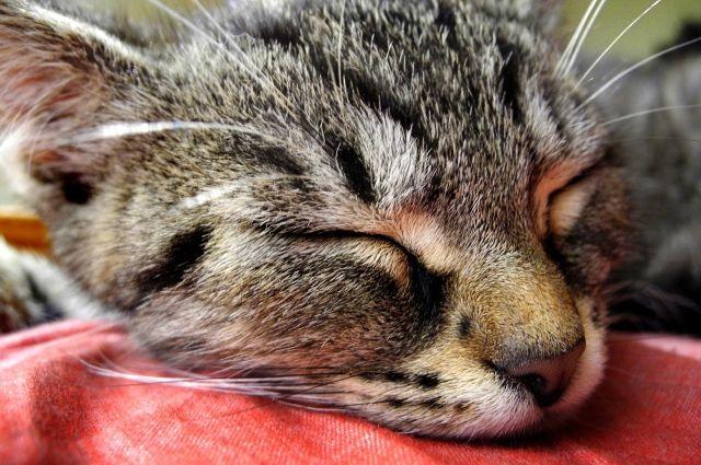 Мошенник изКемеровской области «нашел» потерянного кота иркутянки