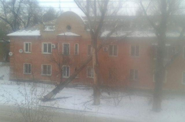 ВВолгограде сухое дерево упало намногоквартирный дом