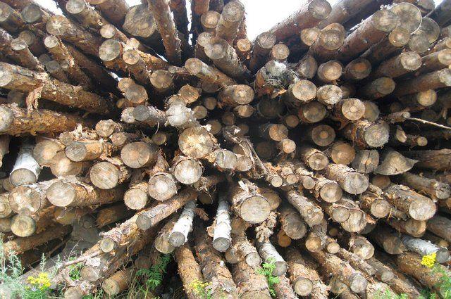 В Кувандыкском округе лесоруб незаконно нарубил дров на 2,5 миллиона