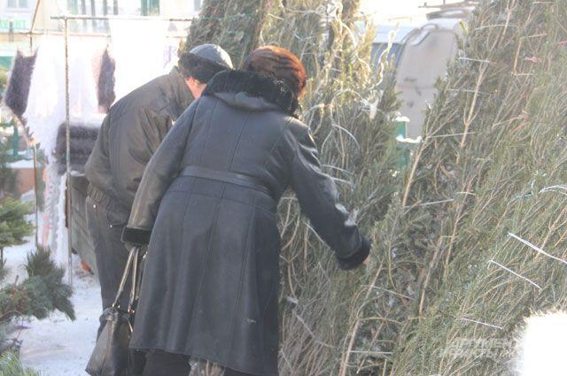 Стоимость новогодней елки составит от 250 рублей.