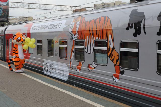 Куда уехал амурский тигр? Поезд «Россия» украсили изображения кошачьих