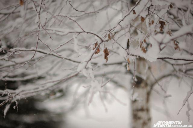 Начало декабря выдалось снежным
