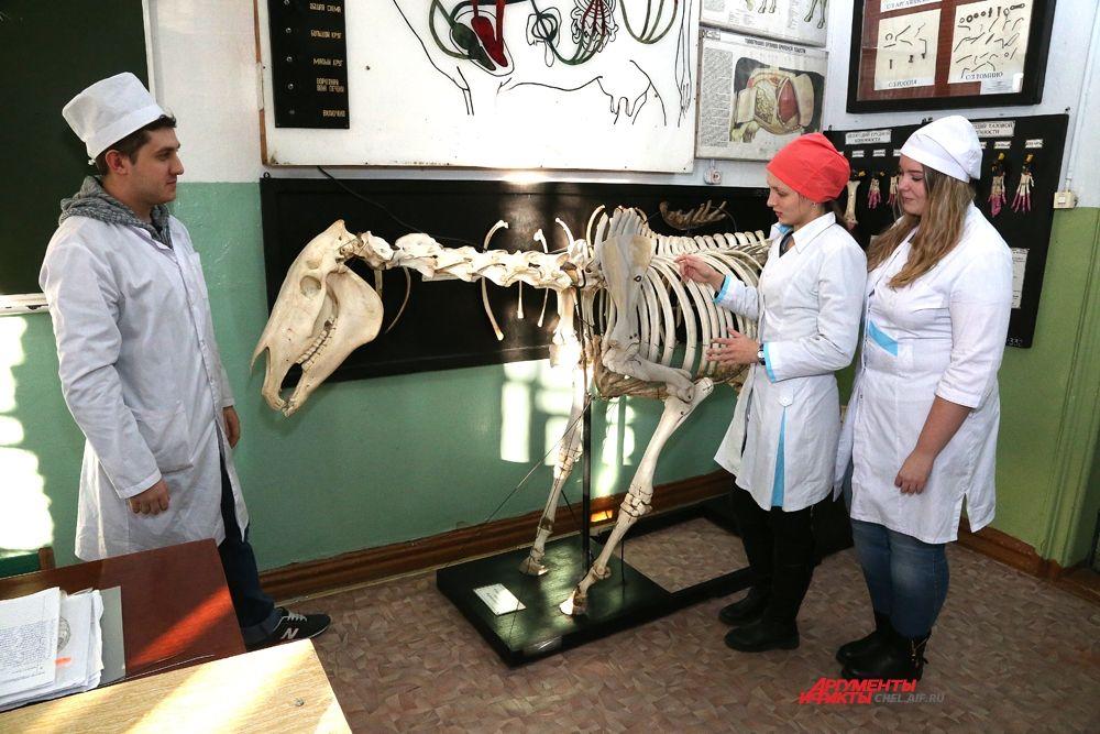 Будущие ветеринары  изучают анатомию только на материалах настоящих животных. Ни каких муляжей и бумажных таблиц.