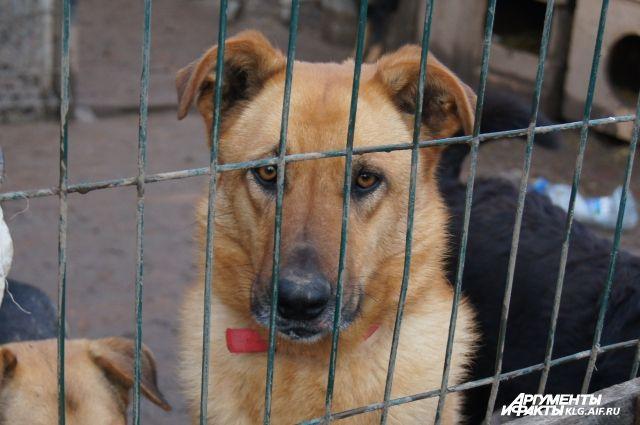 Ежегодно около 2,5 тысяч калининградцев страдают от укусов животных.