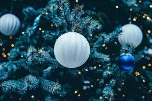 Под Новый год ёлки в городе чаще всего пропадают