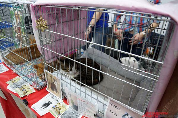 Пермяки могут взять кошку из приюта прямо на выставке.