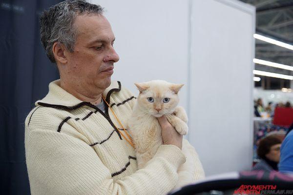 Иногда хозяева достают кошек и выставляют их перед публикой на показ.