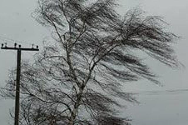 ВАлтайском крае объявлено штормовое предупреждение из-за метели