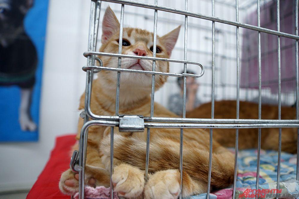 Кошкам будет необходимо с грацией и изяществом преодолеть препятствия на скорость и показать лучшее время.