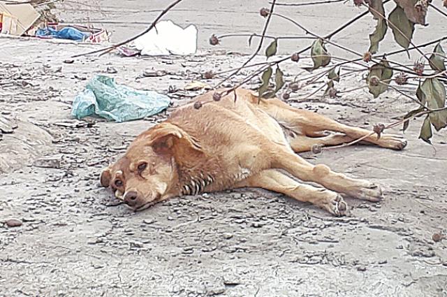 Уголовный кодекс предусматривает наказание за жестокость к животным. Но дело о живодёрстве редко доходит до суда.