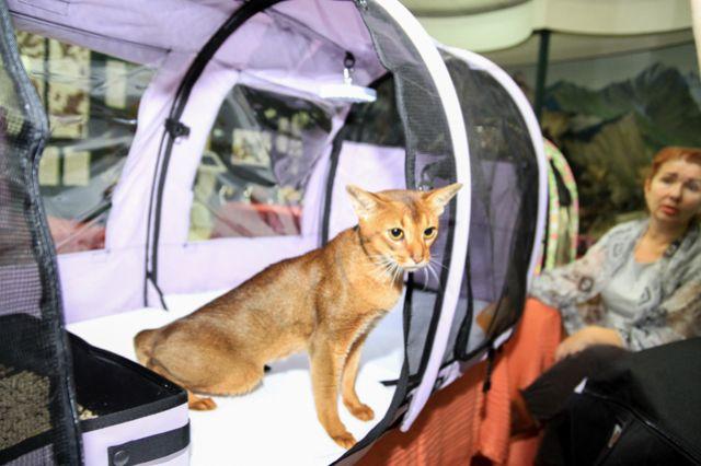 Иркутяне увидят котят редких пород.