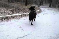 Владельцам, которые не убирают за собакой экскременты, придётся платить штраф.