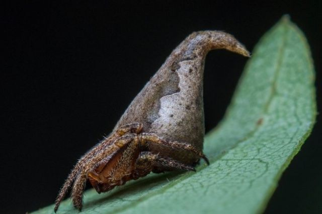 Ученые назвали новый вид пауков вчесть шляпы из«Гарри Поттера»