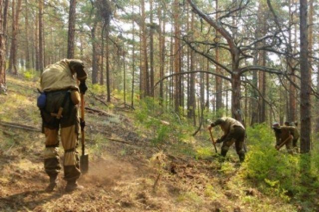 Чиновники недовольны, как регион обращается с лесом.