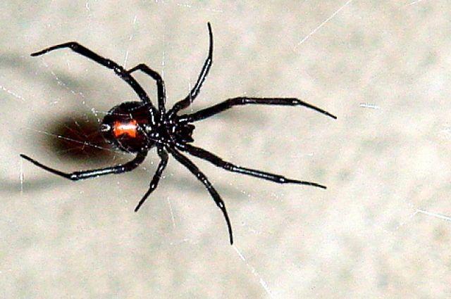 Барнаульцы смогут потрогать самых рискованных пауков вмире