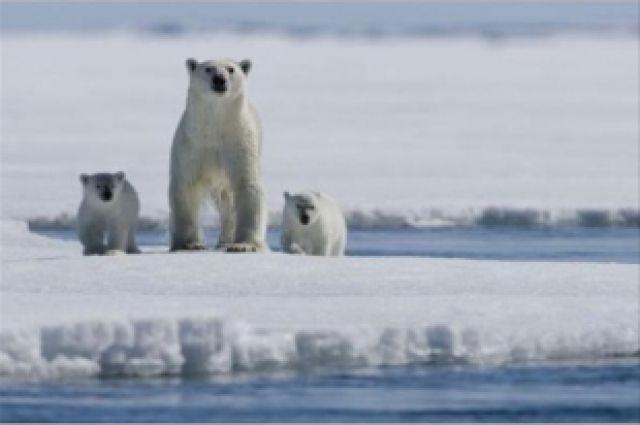 ВАрктике зафиксировано рекордное потепление
