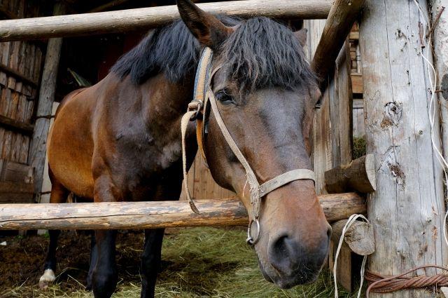 ВМалмыжском районе цыган похитил лошадей