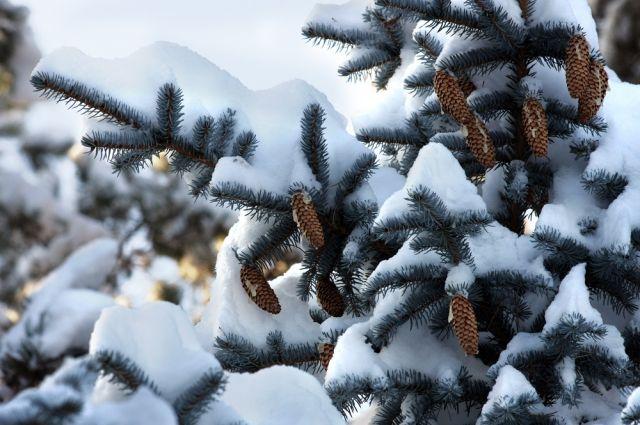 Изменение погодных условий произошло из-за проникновения на нашу территорию теплых воздушных масс с соседнего Казахстана.