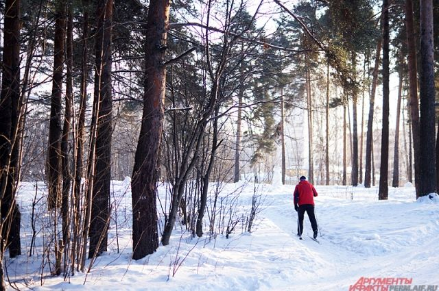 Если мы продолжим наступление на городские леса, то какую среду оставим нашим потомкам?