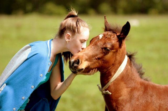 Ветеринар отправил вКазахстан лошадей вместо кошки