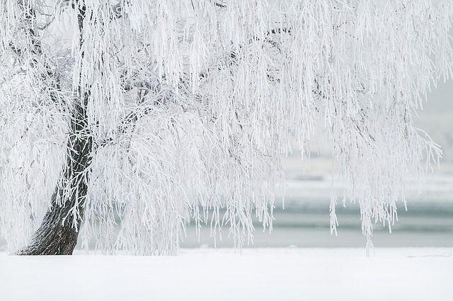 ВКурганской иЧелябинской областях сохранятся морозы. кое-где - доминус 40