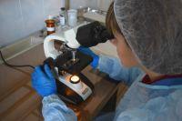 Наличие паразитов у питомцев наблюдается в любой период времени года.