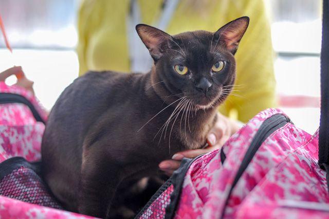 Заболевшая кошка задержалась на пути в ветеринарку