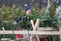 Полиция усилила охрану калининградских лесов от «черных» дровосеков.