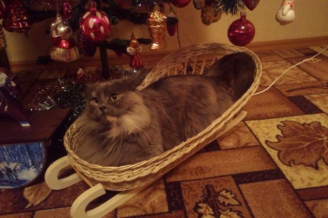 Многие кошки обожают ёлочные украшения.