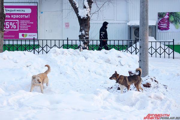 От холода страдают и животные.