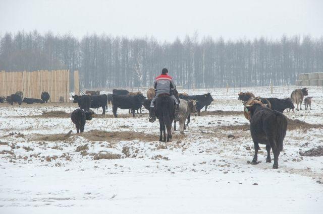 До конца года холдинг откроет ещё одну и построит две новых фермы.